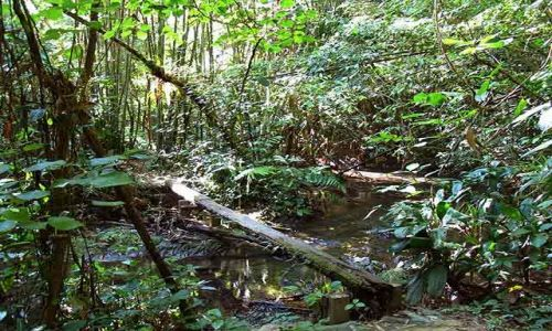 Zdjecie KOSTARYKA / Peninsula de Nicoya / Puntarenas / dżungla