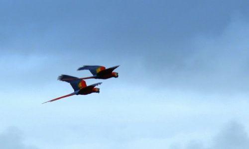 Zdjecie KOSTARYKA / Puerto Jimenez / Carate / Byc wolnym jak ptak