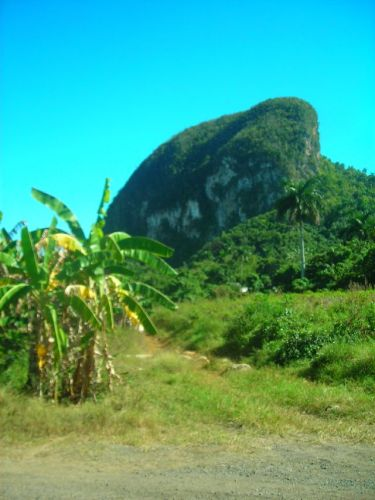 Zdj�cia: Vinales, Vinales, Na bananowy szaber..., KUBA