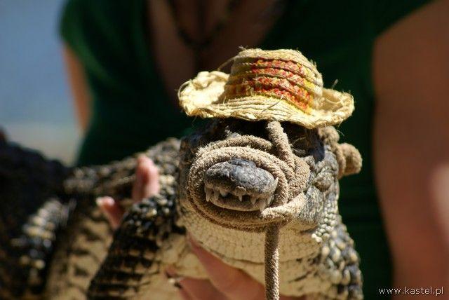 Zdjęcia: Trynidad, Krokodyl, KUBA