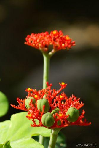 Zdjęcia: Trynidad, Ogród botaniczny, KUBA