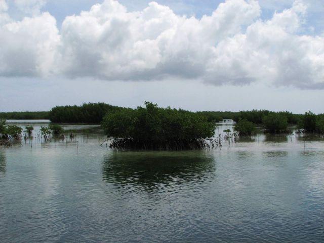 Zdjęcia: kuba, północne wybrzeże, namorzyny, KUBA