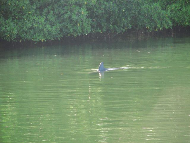 Zdjęcia: kuba, Zapada, delfin, KUBA
