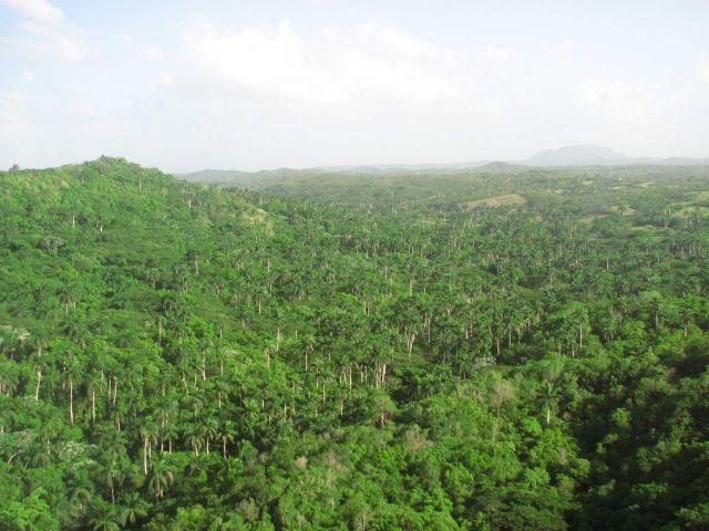 Zdjęcia: Kuba, Matanzas, zielona Kuba, KUBA