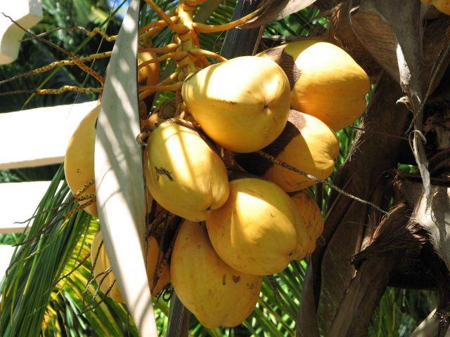 Zdjęcia: Varadero, Varadero, owoce, KUBA