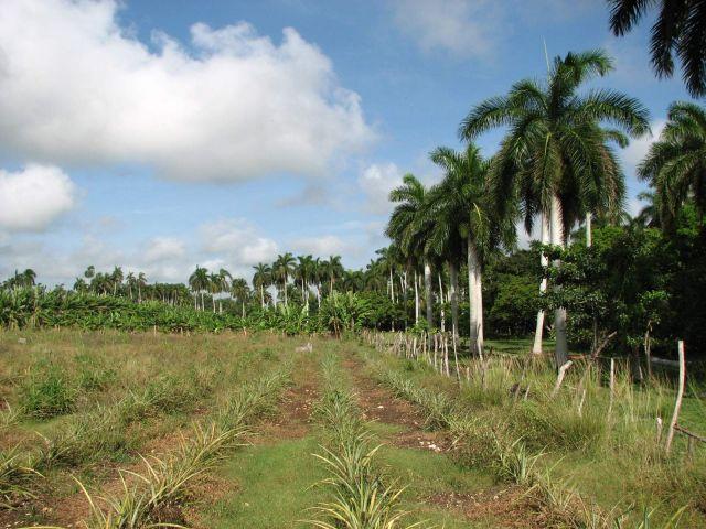 Zdjęcia: kuba, Matanzas, Matanzas, KUBA