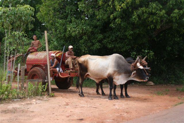Zdjęcia: wieś, półwysep Zapata, wóz, KUBA