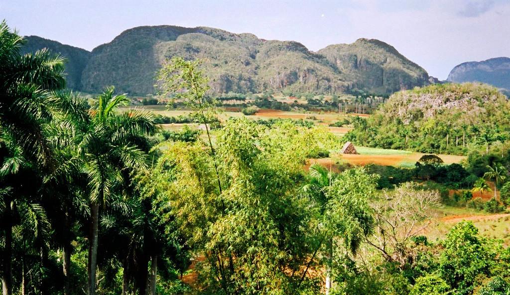 Zdjęcia:  , Pinar del Rio, Tytoniowe pola, KUBA