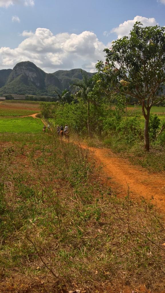 Zdjęcia: Vinales, Vinales, Dolina Vinales, KUBA