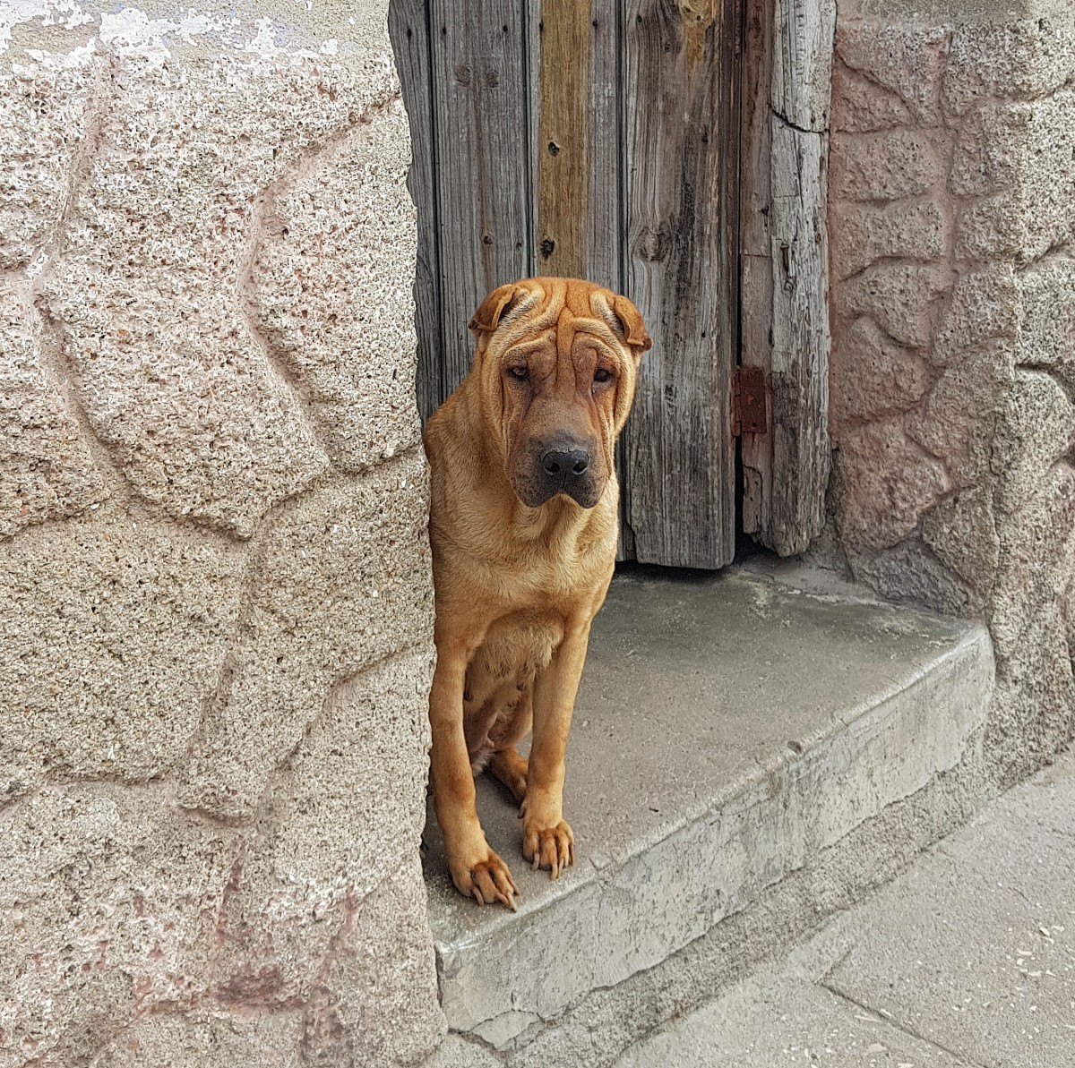 Zdjęcia: Camagüey, środkowy wschód, Nec temere, nec timide ;-), KUBA