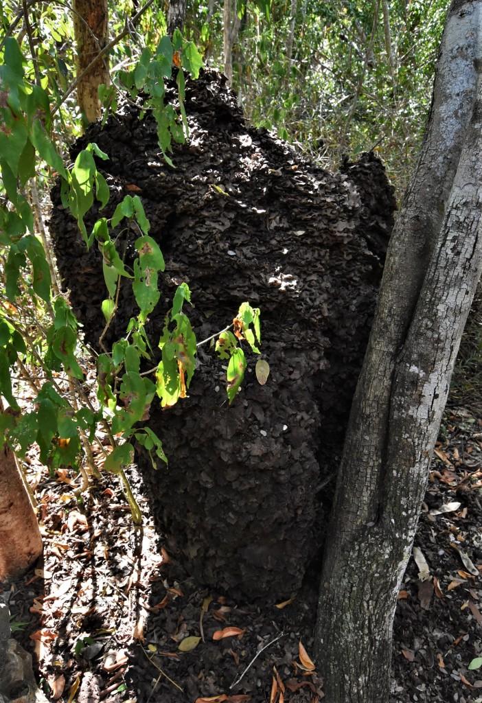 Zdjęcia: Varadero, Półwysep Varadero, Półwysep Varadero, kopiec termitów, KUBA