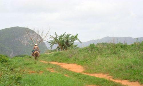 Zdjecie KUBA / - / Viniales / horseback..wyprawa na plantacje