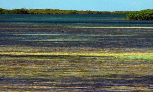 Zdjecie KUBA / północna część Kuby / wschodnia część Caya Coco / Wodny kobierzec