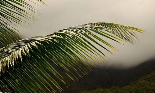 KUBA / wschodnia Kuba / rezerwat A. Humboldta / Mgły nad doliną..