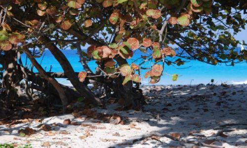 Zdjęcie KUBA / Varadero / gdzieś nad morzem / Kolory plaży