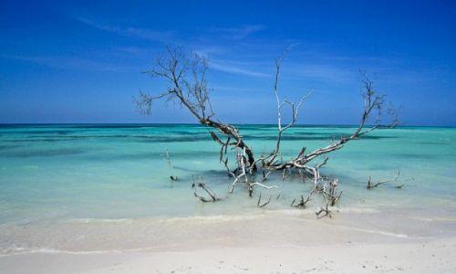 Zdjecie KUBA / prownicja Pinal del Rio / wybrzeże północne / ...
