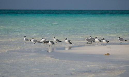 Zdjęcie KUBA / Cayo Guillermo / Playa Pilar / Ptaki