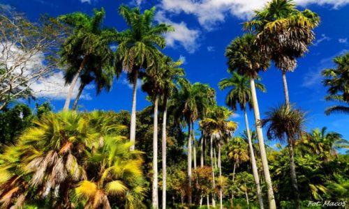 Zdjęcie KUBA / Trinidad / okolice Trinidad / Palmowo i gorąco