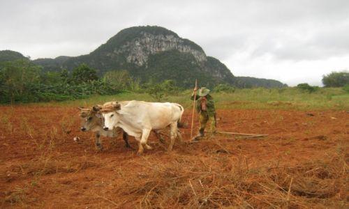 Zdjecie KUBA / Prowincja Pinar del Rio / Dolina Viniales / Bronowanie po kubańsku