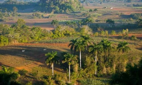 Zdjecie KUBA / Pinal del Rio / Vinales / Poranek w Vinal