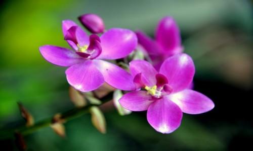 Zdjecie KUBA / xxx / Ogród Orchidei / Orchidea