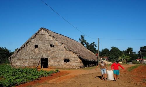 KUBA / Pinar del Río,  zachodnia Kuba / plantacja tytoniu / Casas de tabaco