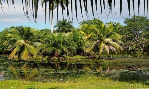 Zdjęcie KUBA / płd. Kuba / Półwysep Zapata / Laguna del Tesoro