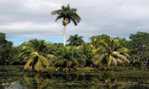 Zdjęcie KUBA / południowa Kuba / Półwysep Zapata / Laguna del Tesoro