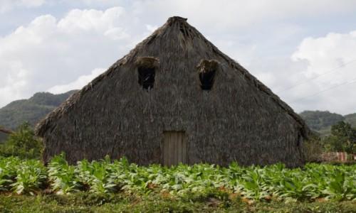 KUBA / Prowincja Pinar del Rio / Vinales / Suszarnia tytoniu
