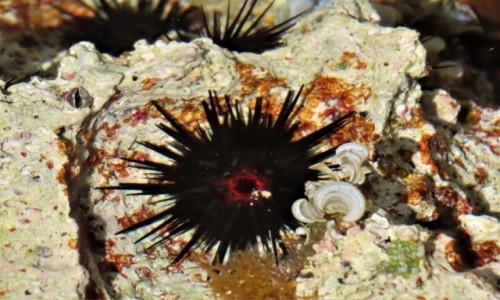 Zdjecie KUBA / Matanzas / Playa Giron / Zatoka Świń to bogactwo morskiego życia