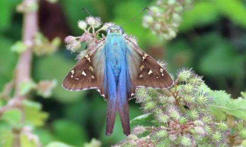 KUBA / Pinar del Rio / Vinales / Motyle są piękne