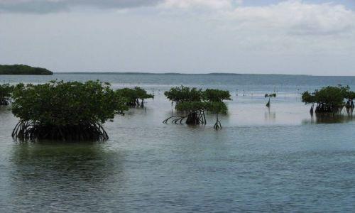 Zdjęcie KUBA / północne wybrzeże / kuba / namorzyny