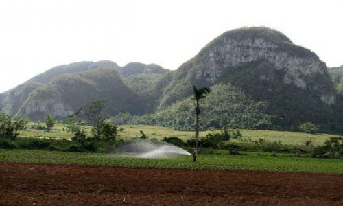 KUBA / Pinar del Rio / dolina / plantacja tytoniu