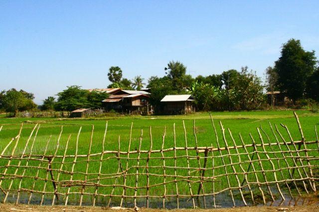 Zdj�cia: Si Pha Don, Pola ry�owe2, LAOS