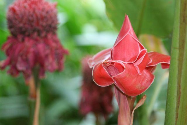 Zdjęcia: Płaskowyż Bolaven, Co to za kwiatek?, LAOS