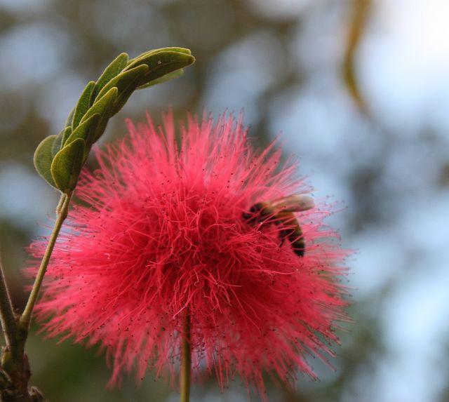 Zdjęcia: Płaskowyż Bolaven, Pszczólka wie co robi, LAOS