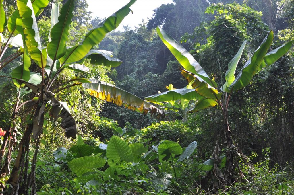 Zdjęcia: okolice Louangphrabang, północny Laos, W dżungli, LAOS