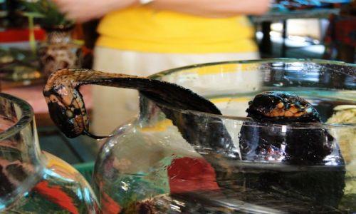 LAOS / - / Laos / Bimber na kobrze i skorpionach - wierzcie mi - super!