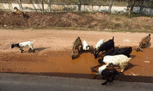 Zdjęcie LAOS / Laos północny / okolice Vientiane / przy drodze