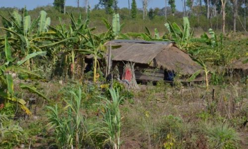 Zdjęcie LAOS / - / Laos / Lokum wśród zieleni