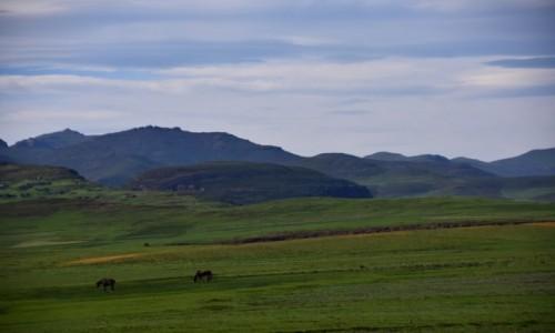 LESOTHO / Płn. Lesoto / Bokong Nature Reserve / Pejzaż na konie i żółte kwiaty