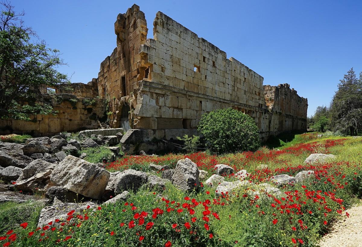 Zdjęcia: Starożytne miasto hellenistyczne, Baalbek, Ruiny okraszone makami, LIBAN