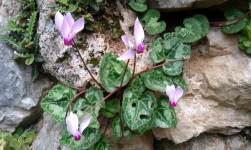 Zdjecie LIBAN / Bszarri / Dolina Kadisha / Na skale