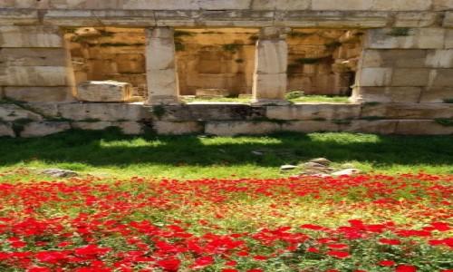 Zdjęcie LIBAN / Baalbek / Hellenistyczne miasto / Wszędobylskie maki