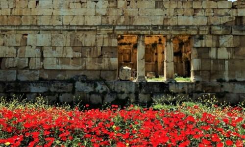 Zdjęcie LIBAN / Dolina Bekaa / Baalbek, ruiny hellenistycznego miasta / Maki wśród ruin 2