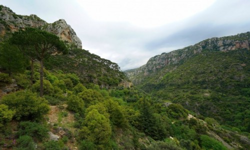 Zdjecie LIBAN / Bcharre / Qadisha Valley / Droga wśród cedrów