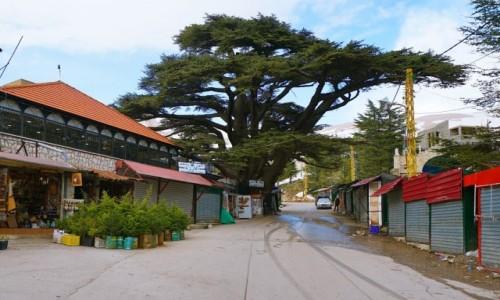 LIBAN / Bsharri / Ośrodek narciarski Cedars Bsharri / Na deptaku