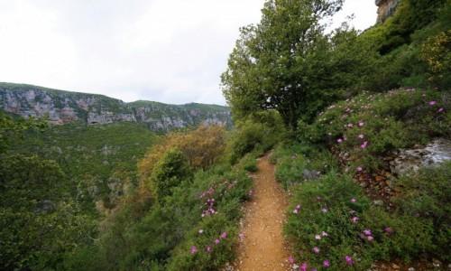 Zdjecie LIBAN / Liban Północny   / Dolina Kadisha / Droga wśród róż