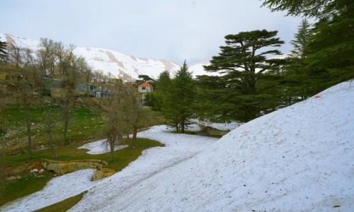 Zdjecie LIBAN / Liban Północny   / .. / Wiosna w Bsharre