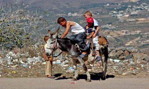 Zdjęcie LIBAN / brak / Gdzieś w Libanie / Wdrodze